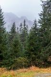 与在低云盖的山的Forrest 高Tatra山, NiÅ ¾ nà ½ Å ½ abà Š¡ tÃt,斯洛伐克 库存照片