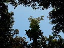 与在天空的四棵树之一的场面 免版税库存图片