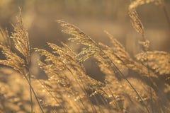 与在日出的明亮的自然本底 库存图片