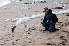 与在海滩的波浪关上的企鹅的接近的遭遇 库存图片
