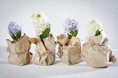 与在牛皮纸和白色风信花的花构成包裹的丁香 背景开花例证春天向量白色 2个所有时段小鸡概念复活节彩蛋开花草被绘的被安置的年轻人 图库摄影