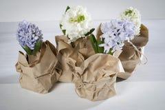 与在牛皮纸和白色风信花的花构成包裹的丁香 背景开花例证春天向量白色 2个所有时段小鸡概念复活节彩蛋开花草被绘的被安置的年轻人 免版税库存照片