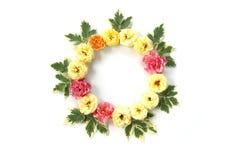 与在白色和绿色叶子的圆的框架隔绝的玫瑰 图库摄影