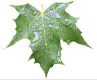 与在白色查出的下落的叶子 图库摄影