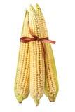 与在白色查出的棕色弓的玉米 库存图片