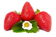 与在白色背景和叶子的三个草莓隔绝的花 库存图片