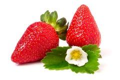 与在白色背景和叶子的两个草莓隔绝的花 免版税库存图片