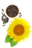 与在白色背景和叶子的向日葵隔绝的种子 免版税库存图片
