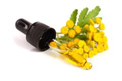 与在白色背景和叶子的根本艾菊油隔绝的花 图库摄影