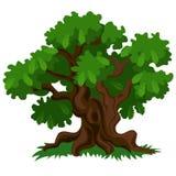 与在白色背景和新鲜的草的一个落叶橡树隔绝的绿色叶子 传染媒介动画片特写镜头 免版税库存图片