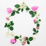 与在白色背景和瓣的花卉圆的框架隔绝的郁金香花、玫瑰 平的位置,顶视图 免版税库存照片