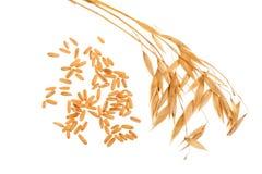 与在白色背景隔绝的五谷的燕麦钉 库存图片