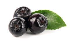 与在白色背景隔绝的叶子的堂梨属灌木 黑aronia莓果 免版税库存照片