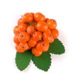 与在白色背景隔绝的叶子的橙色花揪 顶视图 免版税图库摄影