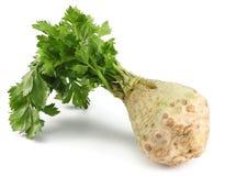 与在白色背景隔绝的叶子的芹菜根 芹菜查出的白色 健康的食物 图库摄影