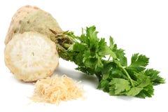 与在白色背景隔绝的叶子的芹菜根 芹菜查出的白色 健康的食物 库存照片