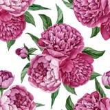 与在白色背景隔绝的开花的牡丹的精妙和柔和的无缝的花卉样式,水彩手画设计 库存例证