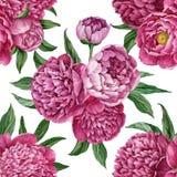 与在白色背景隔绝的开花的牡丹的精妙和柔和的无缝的花卉样式,水彩手画设计 皇族释放例证
