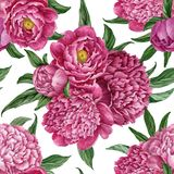 与在白色背景隔绝的开花的牡丹的精妙和柔和的无缝的花卉样式,水彩手画设计 向量例证
