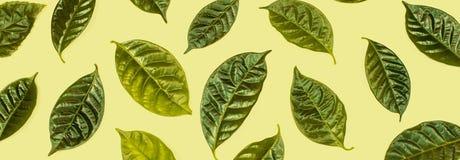 与在白色背景隔绝的绿色叶子的横幅自然本底 免版税库存照片