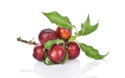 与在白色背景隔绝的绿色叶子的红色樱桃李子 库存照片