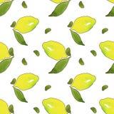 与在白色背景隔绝的绿色叶子的黄色柠檬果子 设计的水彩图画无缝的样式 皇族释放例证