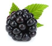 与在白色背景隔绝的绿色叶子的黑莓 宏指令 库存照片