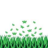 与在白色背景隔绝的草的蝴蝶 库存图片