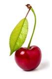 与在白色背景隔绝的叶子特写镜头的一棵樱桃 库存图片