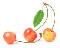 与在白色背景隔绝的叶子特写镜头的三棵樱桃 库存图片