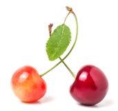 与在白色背景隔绝的叶子特写镜头的两棵樱桃 免版税库存照片
