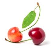 与在白色背景隔绝的叶子特写镜头的两棵樱桃 库存照片