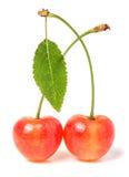 与在白色背景隔绝的叶子特写镜头的两棵樱桃 库存图片