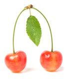 与在白色背景隔绝的叶子特写镜头的两棵樱桃 免版税图库摄影