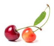与在白色背景隔绝的叶子特写镜头的两棵樱桃 图库摄影