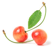 与在白色背景隔绝的叶子特写镜头的两棵樱桃 免版税库存图片