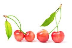 与在白色背景隔绝的叶子特写镜头的四棵樱桃 免版税库存照片