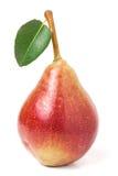 与在白色背景隔绝的叶子的一个红黄色梨 免版税库存照片