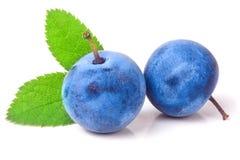 与在白色背景隔绝的叶子的两个新鲜的黑刺李莓果 免版税库存照片