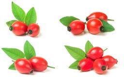 与在白色背景隔绝的叶子的玫瑰果莓果 集合或co 免版税库存照片