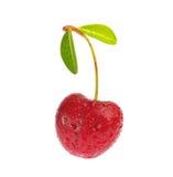 与在白色背景隔绝的叶子的甜成熟樱桃 免版税库存照片