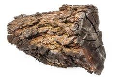 与在白色背景隔绝的吠声的被烧焦的木头 库存图片