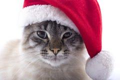 与在白色背景隔绝的圣诞老人帽子的猫 免版税库存图片