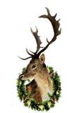 与在白色背景隔绝的圣诞节花圈的水彩鹿 圣诞节设计、印刷品或者backgr的野生动物例证 向量例证