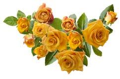 与在白色背景隔绝的淡黄色橙色玫瑰花束的美好的框架  免版税图库摄影