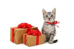 与在白色背景隔绝的礼物盒的美丽的猫 免版税库存照片