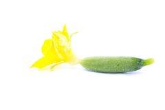 与在白色背景隔绝的花的新鲜的黄瓜 免版税库存照片