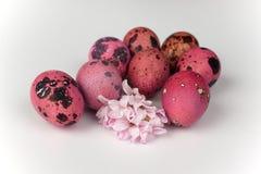 与在白色背景隔绝的花的桃红色鹌鹑复活节彩蛋 库存照片