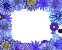 与蓝色,紫色花的花框架在白色 库存照片