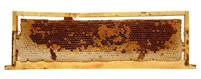 与在白色背景隔绝的蜂蜜梳子的木框架 库存图片